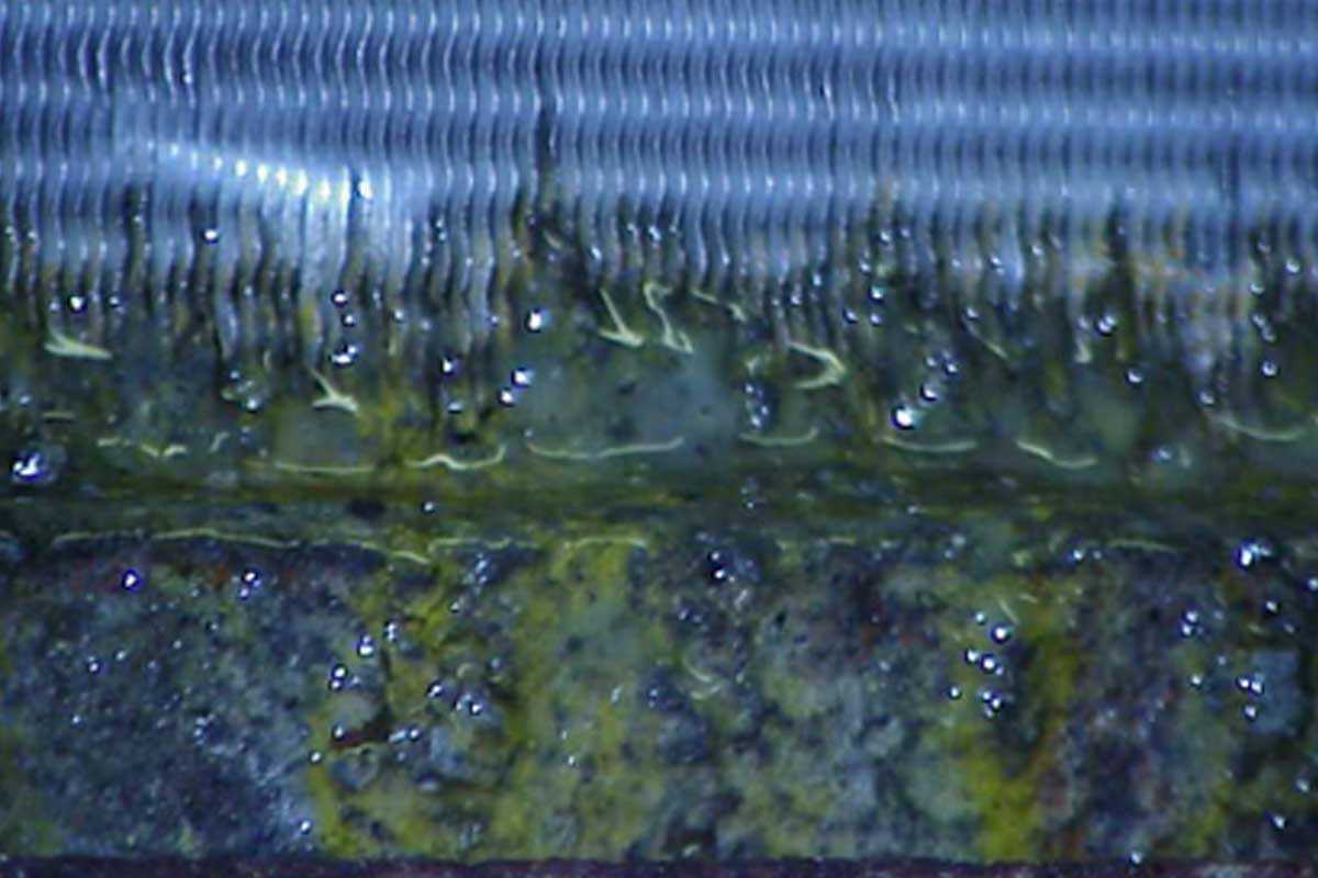 Banish biofilm with CoilCare