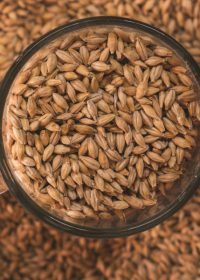 Improved productivity for malt producer