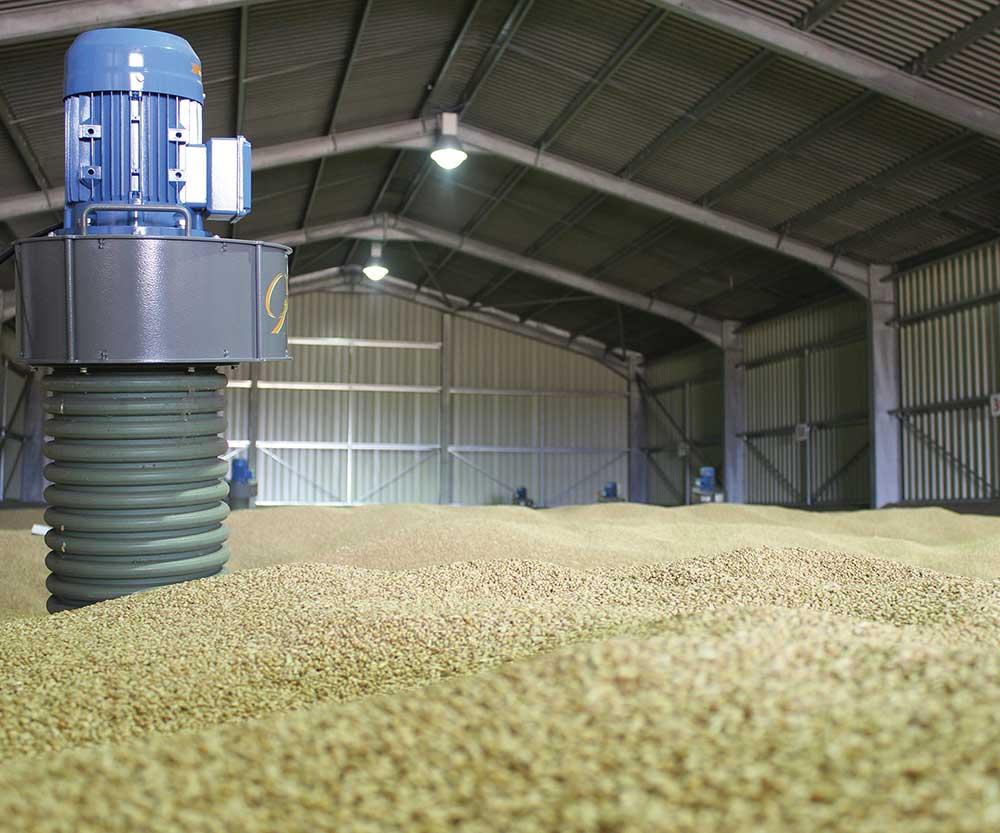 Pedestals in grain